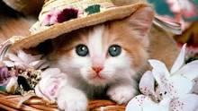 Image result for gambar kucing lucu